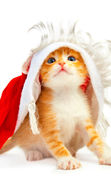 Download free mobile wallpaper 8098: Holidays, Animals, Cats, New Year, Christmas, Xmas, Postcards for phone or tab. Download images, backgrounds and wallpapers for mobile phone for free.