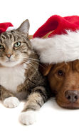 Download free mobile wallpaper 13866: Cats, New Year, Holidays, Christmas, Xmas, Dogs, Animals for phone or tab. Download images, backgrounds and wallpapers for mobile phone for free.