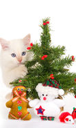 Download free mobile wallpaper 12733: Cats, New Year, Holidays, Christmas, Xmas, Animals for phone or tab. Download images, backgrounds and wallpapers for mobile phone for free.