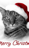 Download free mobile wallpaper 13908: Cats, New Year, Holidays, Christmas, Xmas, Animals for phone or tab. Download images, backgrounds and wallpapers for mobile phone for free.