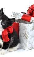 Download free mobile wallpaper 12667: Cats, Holidays, Animals for phone or tab. Download images, backgrounds and wallpapers for mobile phone for free.