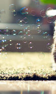 Download free mobile wallpaper 14712: Cats, Bubbles, Animals for phone or tab. Download images, backgrounds and wallpapers for mobile phone for free.
