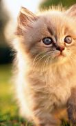 Download free mobile wallpaper 24117: Cats, Animals for phone or tab. Download images, backgrounds and wallpapers for mobile phone for free.