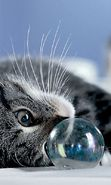Download free mobile wallpaper 441: Animals, Cats, Bubbles for phone or tab. Download images, backgrounds and wallpapers for mobile phone for free.