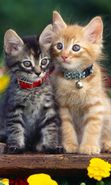 Download free mobile wallpaper 2229: Animals, Cats for phone or tab. Download images, backgrounds and wallpapers for mobile phone for free.