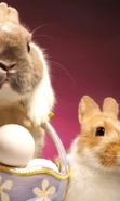 Download free mobile wallpaper 43392: Rabbits,Easter,Holidays,Animals for phone or tab. Download images, backgrounds and wallpapers for mobile phone for free.
