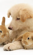 Download free mobile wallpaper 17040: Rabbits, Dogs, Animals for phone or tab. Download images, backgrounds and wallpapers for mobile phone for free.