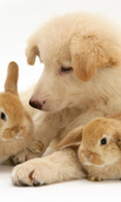 Download free mobile wallpaper 39855: Rabbits,Dogs,Animals for phone or tab. Download images, backgrounds and wallpapers for mobile phone for free.