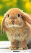 Download free mobile wallpaper 47105: Rabbits,Animals for phone or tab. Download images, backgrounds and wallpapers for mobile phone for free.