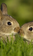 Download free mobile wallpaper 47743: Rabbits,Animals for phone or tab. Download images, backgrounds and wallpapers for mobile phone for free.