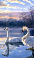 Download free mobile wallpaper 27645: Swans, Birds, Plants for phone or tab. Download images, backgrounds and wallpapers for mobile phone for free.