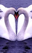 Download free mobile wallpaper 617: Animals, Birds, Hearts, Swans, Love, Valentine's day for phone or tab. Download images, backgrounds and wallpapers for mobile phone for free.