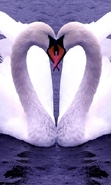 Download free mobile wallpaper 46530: Swans,Birds,Hearts,Animals for phone or tab. Download images, backgrounds and wallpapers for mobile phone for free.