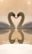 Download free mobile wallpaper 29352: Swans,Birds,Animals for phone or tab. Download images, backgrounds and wallpapers for mobile phone for free.