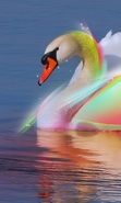 Download free mobile wallpaper 39841: Swans,Birds,Animals for phone or tab. Download images, backgrounds and wallpapers for mobile phone for free.