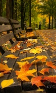 Download free mobile wallpaper 33410: Leaves,Autumn,Landscape for phone or tab. Download images, backgrounds and wallpapers for mobile phone for free.
