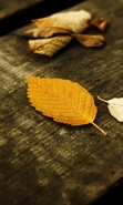 Download free mobile wallpaper 41417: Leaves,Autumn,Landscape,Nature for phone or tab. Download images, backgrounds and wallpapers for mobile phone for free.