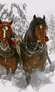 Download free mobile wallpaper 23869: Horses, Snow, Animals, Winter for phone or tab. Download images, backgrounds and wallpapers for mobile phone for free.