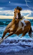 Download free mobile wallpaper 41017: Horses,Animals for phone or tab. Download images, backgrounds and wallpapers for mobile phone for free.