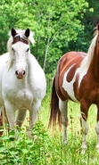 Download free mobile wallpaper 45033: Horses,Animals for phone or tab. Download images, backgrounds and wallpapers for mobile phone for free.