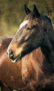 Download free mobile wallpaper 45341: Horses,Animals for phone or tab. Download images, backgrounds and wallpapers for mobile phone for free.