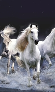Download free mobile wallpaper 47285: Horses,Animals for phone or tab. Download images, backgrounds and wallpapers for mobile phone for free.