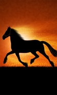 Download free mobile wallpaper 47409: Horses,Animals for phone or tab. Download images, backgrounds and wallpapers for mobile phone for free.