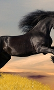 Download free mobile wallpaper 47540: Horses,Animals for phone or tab. Download images, backgrounds and wallpapers for mobile phone for free.