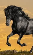 Download free mobile wallpaper 47717: Horses,Animals for phone or tab. Download images, backgrounds and wallpapers for mobile phone for free.