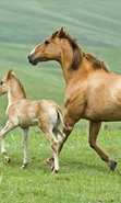 Download free mobile wallpaper 48423: Horses,Animals for phone or tab. Download images, backgrounds and wallpapers for mobile phone for free.