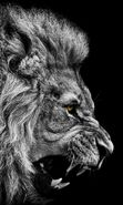 Download free mobile wallpaper 18212: Lions, Animals for phone or tab. Download images, backgrounds and wallpapers for mobile phone for free.