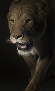 Download free mobile wallpaper 45296: Lions,Animals for phone or tab. Download images, backgrounds and wallpapers for mobile phone for free.