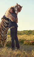 Download free mobile wallpaper 16400: People, Tigers, Animals for phone or tab. Download images, backgrounds and wallpapers for mobile phone for free.