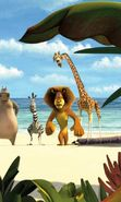 Download free mobile wallpaper 16155: Madagascar, Cartoon for phone or tab. Download images, backgrounds and wallpapers for mobile phone for free.
