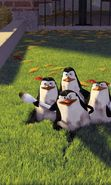 Download free mobile wallpaper 9787: Cartoon, Pinguins, Madagascar for phone or tab. Download images, backgrounds and wallpapers for mobile phone for free.