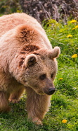 Download free mobile wallpaper 40188: Bears,Animals for phone or tab. Download images, backgrounds and wallpapers for mobile phone for free.