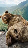 Download free mobile wallpaper 43415: Bears,Animals for phone or tab. Download images, backgrounds and wallpapers for mobile phone for free.