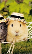 Download free mobile wallpaper 36670: Guinea pigs,Animals for phone or tab. Download images, backgrounds and wallpapers for mobile phone for free.