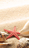 Download free mobile wallpaper 19786: Starfish, Objects, Sand, Shells for phone or tab. Download images, backgrounds and wallpapers for mobile phone for free.