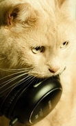 Download free mobile wallpaper 47432: Music,Cats,Animals for phone or tab. Download images, backgrounds and wallpapers for mobile phone for free.