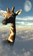 Download free mobile wallpaper 10135: Animals, Sky, Clouds, Giraffes for phone or tab. Download images, backgrounds and wallpapers for mobile phone for free.