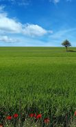 Download free mobile wallpaper 3474: Landscape, Grass, Sky for phone or tab. Download images, backgrounds and wallpapers for mobile phone for free.