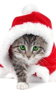 Download free mobile wallpaper 29308: New Year,Cats,Animals for phone or tab. Download images, backgrounds and wallpapers for mobile phone for free.