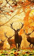 Download free mobile wallpaper 27375: Deers, Autumn, Animals for phone or tab. Download images, backgrounds and wallpapers for mobile phone for free.