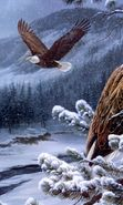 Download free mobile wallpaper 23695: Eagles, Birds, Pictures, Snow for phone or tab. Download images, backgrounds and wallpapers for mobile phone for free.