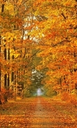 Download free mobile wallpaper 39423: Autumn,Landscape for phone or tab. Download images, backgrounds and wallpapers for mobile phone for free.