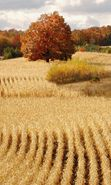 Download free mobile wallpaper 4031: Landscape, Fields, Autumn for phone or tab. Download images, backgrounds and wallpapers for mobile phone for free.