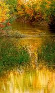 Download free mobile wallpaper 7542: Landscape, Rivers, Grass, Autumn for phone or tab. Download images, backgrounds and wallpapers for mobile phone for free.