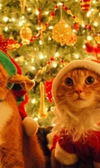 Download free mobile wallpaper 49154: Cats,Holidays,Animals for phone or tab. Download images, backgrounds and wallpapers for mobile phone for free.