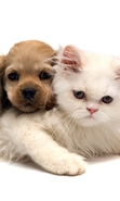 Download free mobile wallpaper 45570: Cats,Dogs,Animals for phone or tab. Download images, backgrounds and wallpapers for mobile phone for free.